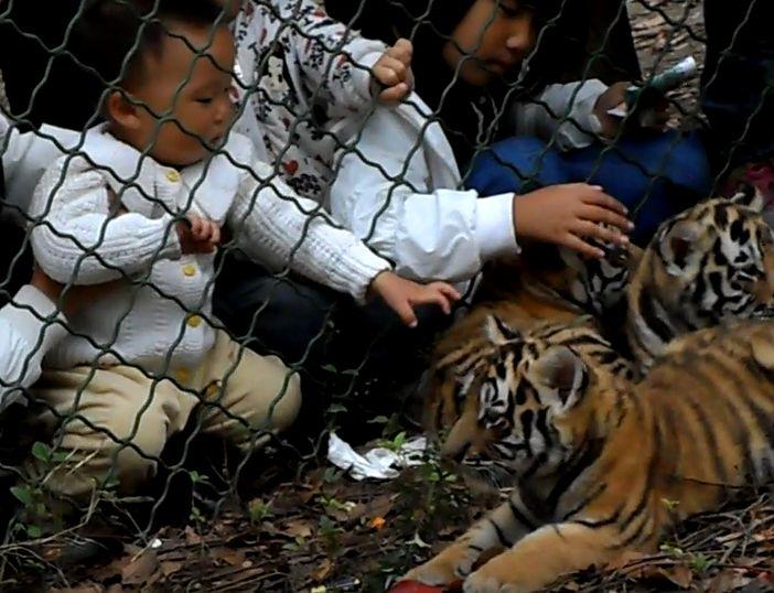 和小老虎的亲密接触