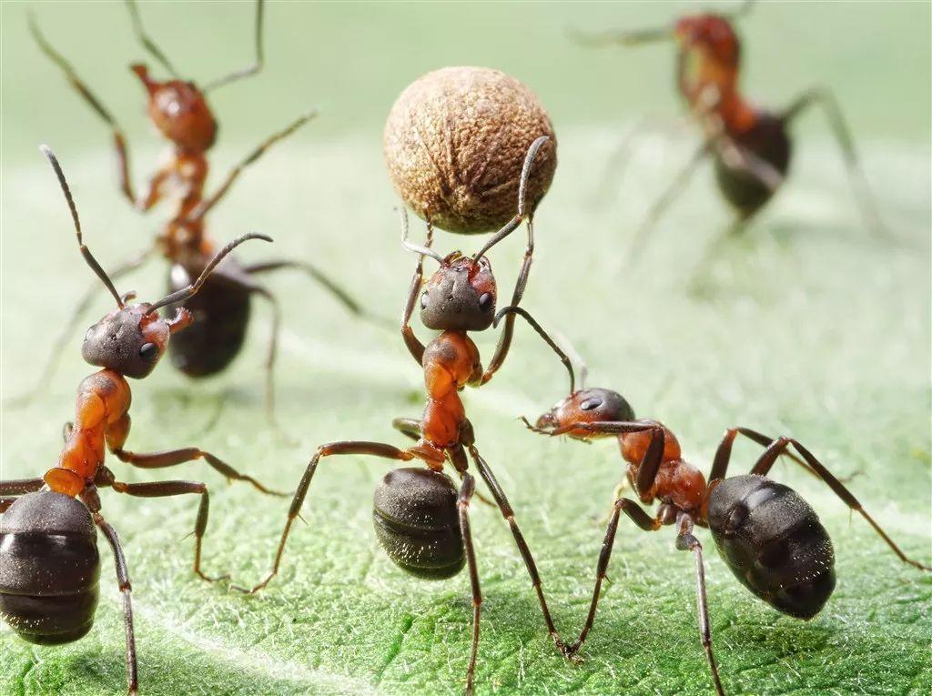 有趣的蚂蚁