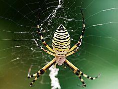 黑暗中一只蜘蛛的自述